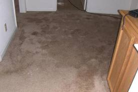 carpet cleaners in salt lake city utah
